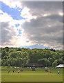 SU7494 : Wormsley cricket by Hugh Chevallier