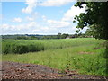 TQ3929 : Crop field off Birchgrove Road by Oast House Archive