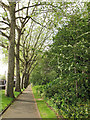 TQ2782 : St John's Wood church: churchyard path by Stephen Craven