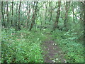 SW4425 : Bridle path through the woods by David Medcalf