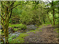 SD9801 : Staly Brook, Castle Clough by David Dixon