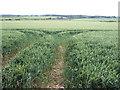 TF0800 : Crop field, Sutton Heath by JThomas