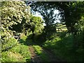 SX6492 : Bridleway up Cosdon Hill by Derek Harper