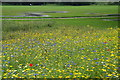SD7907 : Wild flower area in Close Park, Radcliffe by Bill Boaden