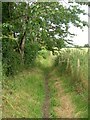 SJ8683 : Path from Hall Wood to Hall Road by John Topping