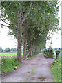 W6168 : Avenue of trees, Curraheen Village by David Hawgood