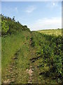 NZ3173 : Path alongside Pea Field by Christine Westerback