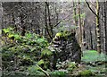 SK1687 : Woodlands Valley - farm ruins by Neil Theasby
