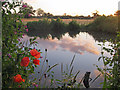 TL8063 : Sunset by the pond by Bob Jones