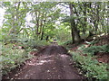 NX0859 : Southern Upland Way in Lime Kiln Wood by Billy McCrorie