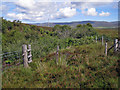 NG3850 : Fence above the gorge by Richard Dorrell