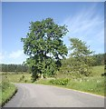 NJ5012 : Tree by a bend in the road by Stanley Howe