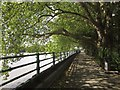 TQ2376 : Thames Path past Bishops Park by Derek Harper