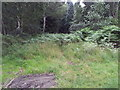 TL7685 : Start of a very overgrown track, Brandon Country Park by Helen Steed