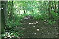 SP0712 : Path in Chedworth Woods by Terry Jacombs