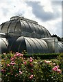 TQ1876 : Kew, Palm House from the Rose Garden : Week 33