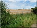 SK9813 : Double field gate into wheatfield by Christine Johnstone