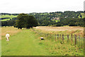 SE2811 : Long Side, Bretton Country Park by Peter Church