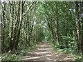 TL2242 : Green Lane heading west through woodland by JThomas