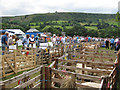 SE7296 : Temporary sheep pens at the Rosedale Show by Pauline Eccles