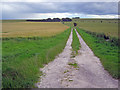 SU0466 : Farm track near Baltic Farm by Trevor Rickard