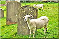 SP0107 : Where goats may safely graze! - All Saints Church - North Cerney by Brian Chadwick