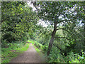 SJ5359 : Beeston castle: path into the woods by Stephen Craven