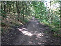 SK3790 : Footpath in Wincobank Wood by Graham Hogg