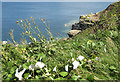 TA1281 : Clifftop vegetation by Pauline Eccles