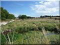 NT6577 : East Lothian Landscape : Beltonford Reservoir, West Barns by Richard West