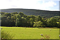 SH8909 : Field in Cwm Tafalog by Nigel Brown
