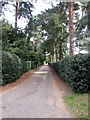 SP9436 : Tree lined lane by Philip Jeffrey