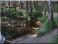 SU8765 : Pond, Bracknell Forest by Alan Hunt