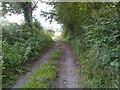 ST5658 : Moreton Lane looking south by James Ayres
