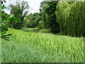 TL0934 : Weed covered Broad Water on the Wrest Park estate by Nick Smith