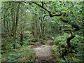 SK2477 : Froggatt Wood footpath by Andrew Hill