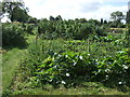 TL1662 : Allotments, Hail Weston by JThomas