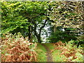 NS7688 : Path in Craigs Wood, Lewis Hill by Alan O'Dowd