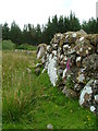 NG4358 : Old wall in Glenuachdarach by Dave Fergusson
