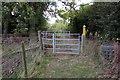 SP9836 : Greensand Ridge Walk in Hamcomer Spinney by Philip Jeffrey