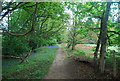 TQ0318 : Wey South Path, Pulborough Park Plantation by N Chadwick