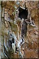 SK2671 : Detail of dead tree on the Chatsworth Estate by Neil Theasby