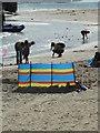 SY3391 : A splash of colour - Lyme Regis by Chris Allen