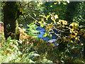 NR8367 : Abhainn nan Gillean by sylvia duckworth