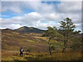 NN9360 : Young Scots pines and Ben Vrackie by Karl and Ali