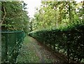 TL4059 : Footpath through Madingley Wood by John Sutton
