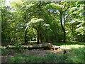 SU7598 : Beech woodland,Kingston Wood by Graham Steven