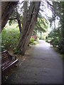 NJ9105 : A tree-lined path through Johnston Gardens by Stanley Howe