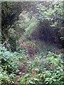 SP7733 : Much overgrown bridleway by Philip Jeffrey