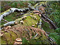 NO5891 : Fungus on fallen tree by Peter Aikman